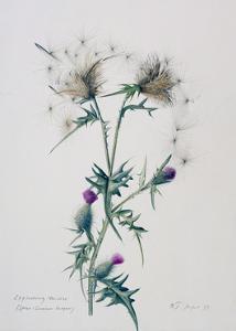 Exploding Thistle, 1999 by Rebecca John