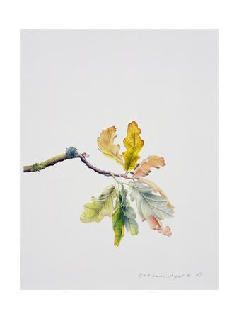 Oak Leaves, 2001