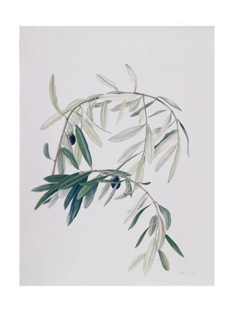 Olive Branches, 1998