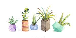 Succulent Display I by Rebekah Ewer