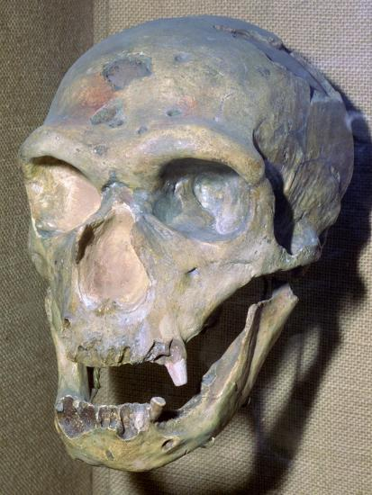 Reconstructed Neanderthal Man's skull, 49,000 BC. Artist: Unknown-Unknown-Photographic Print