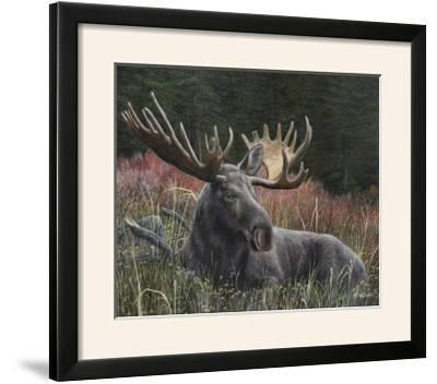 Recumbent Moose-Kevin Daniel-Framed Photographic Print