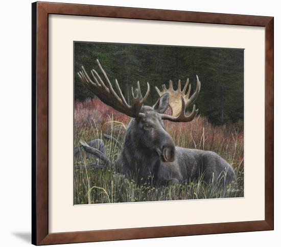 Recumbent Moose-Kevin Daniel-Framed Photographic Print