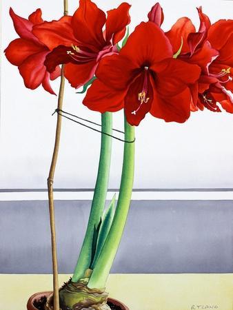 https://imgc.artprintimages.com/img/print/red-amaryllis-2_u-l-pyuost0.jpg?p=0