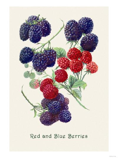 Red and Blue Berries--Art Print