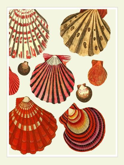 Red and Cream Clam Shells-Fab Funky-Art Print