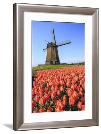 Red and Orange Tulip Fields and the Blue Sky Frame the Windmill in Spring, Netherlands-Roberto Moiola-Framed Photographic Print