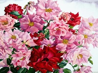 https://imgc.artprintimages.com/img/print/red-and-pink-roses-2008_u-l-pjfl090.jpg?p=0