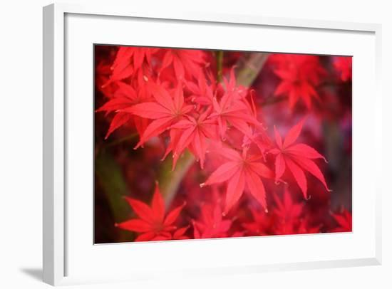 Red and Red-Philippe Sainte-Laudy-Framed Photographic Print