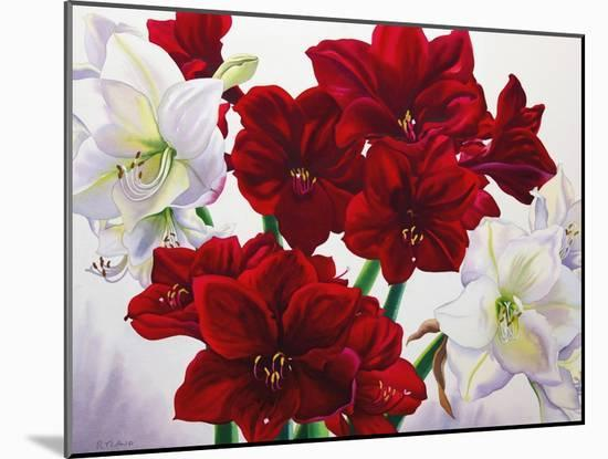 Red and White Amaryllis, 2008-Christopher Ryland-Mounted Premium Giclee Print