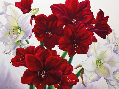 Red and White Amaryllis, 2008-Christopher Ryland-Giclee Print