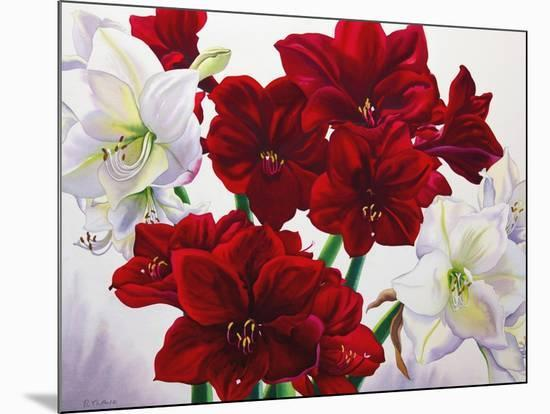 Red and White Amaryllis, 2008-Christopher Ryland-Mounted Giclee Print