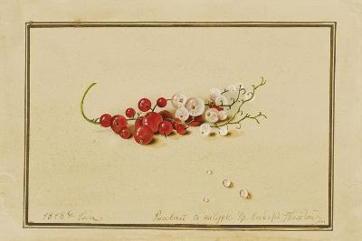 Red and White Currants, 1818-Fedor Petrovich Tolstoy-Giclee Print