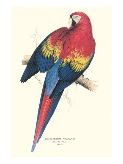 Red and Yellow Macaw - Ara Macao-Edward Lear-Art Print