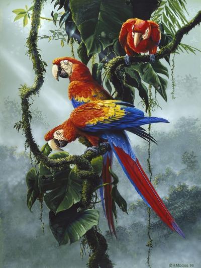 Red and Yellow Macaws-Harro Maass-Giclee Print