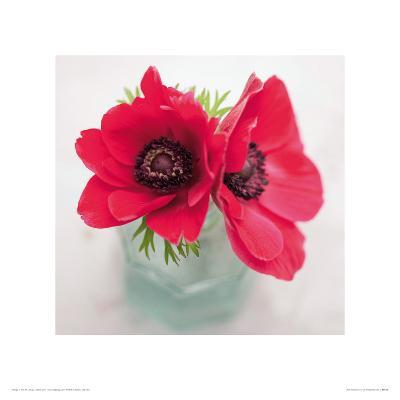 Red Anemones-Ian Winstanley-Giclee Print