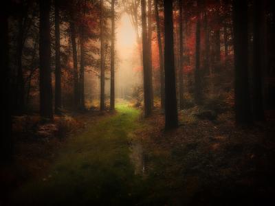 Red Autumn-Philippe Manguin-Photographic Print