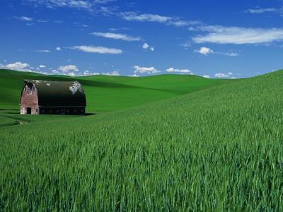 https://imgc.artprintimages.com/img/print/red-barn-in-a-wheat-field_u-l-pzm0s20.jpg?p=0