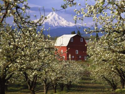 Red Barn in Pear Orchard, Mt. Hood, Hood River County, Oregon, USA-Julie Eggers-Photographic Print