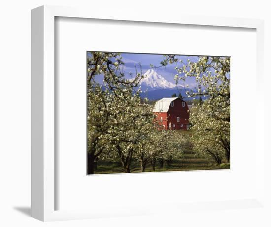 Red Barn in Pear Orchard, Mt. Hood, Hood River County, Oregon, USA-Julie Eggers-Framed Photographic Print