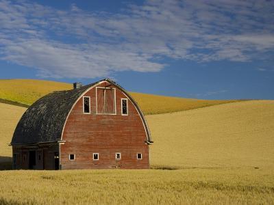 Red Barn in Wheat Field-Darrell Gulin-Photographic Print