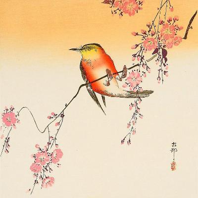 Red Bird and Cherry Blossoms-Koson Ohara-Giclee Print