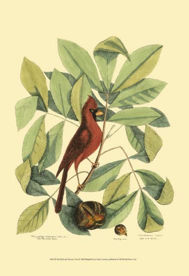 Red Bird and Hiccory Tree-Mark Catesby-Art Print
