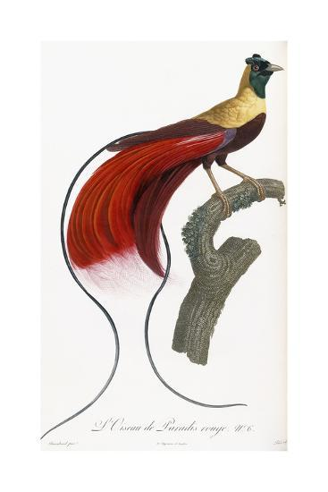 Red Bird of Paradise-Jacques Barraband-Giclee Print