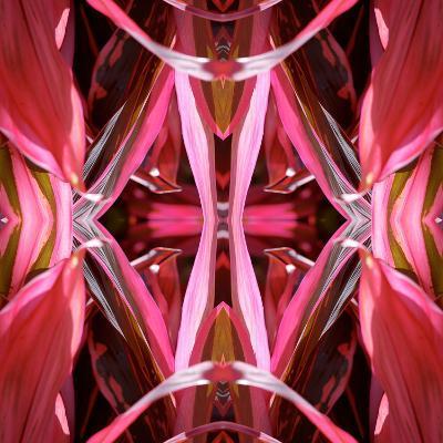 Red Blanket 2X-Rose Anne Colavito-Art Print