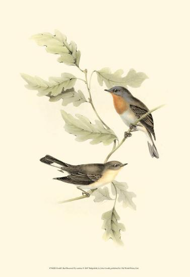 Red-Breasted Fly-Catcher-John Gould-Art Print