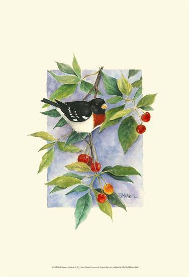 Red-Breasted Grosbeak-Janet Mandel-Art Print