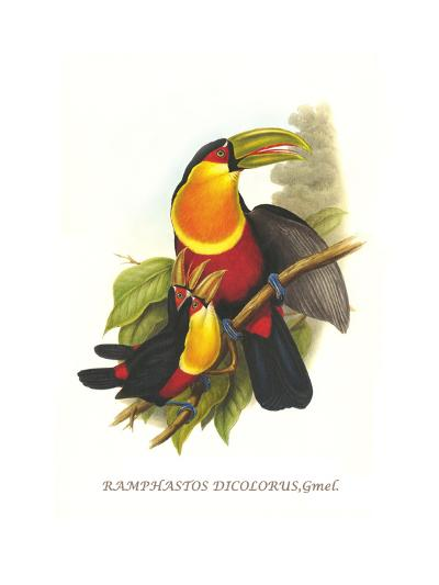 Red Breaster Toucan and Green Billed-John Gould-Art Print