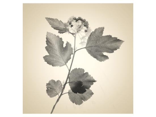 Red Bush-Judy Stalus-Art Print