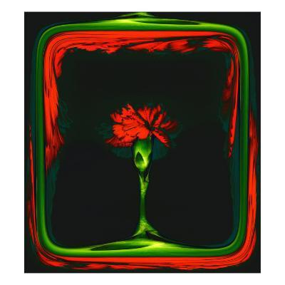 Red Carnation Formalized in a Frame-Winfred Evers-Giclee Print