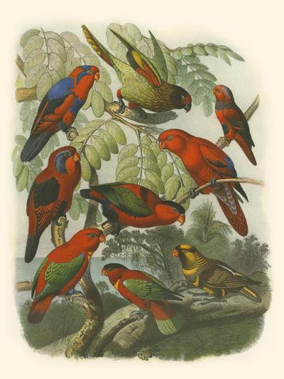 Red Cassel Birds II-Cassell-Art Print