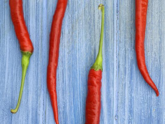 Red Chilli Peppers Chillies Freshly Harvested on Pale Blue Background-Gary Smith-Photographic Print