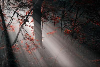 Red Colors and Subeams in the Forest-Gufoto-Photographic Print