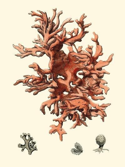 Red Coral III-Vision Studio-Art Print