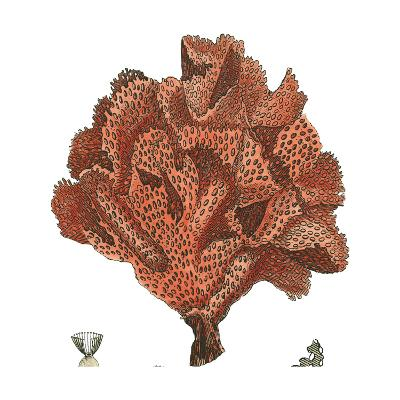 Red Coral IV-Vision Studio-Art Print