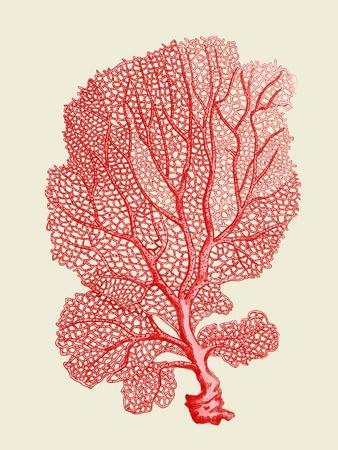 https://imgc.artprintimages.com/img/print/red-corals-1-b_u-l-q11kaxq0.jpg?p=0
