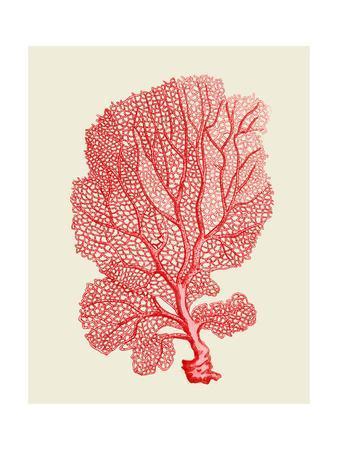 https://imgc.artprintimages.com/img/print/red-corals-1-b_u-l-q11kaxs0.jpg?p=0