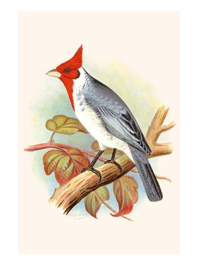 Red Crested Cardinal-F^w^ Frohawk-Art Print