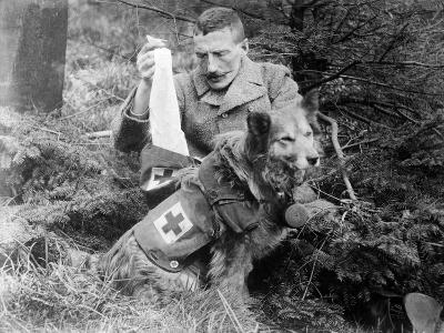 Red Cross Dog, C.1914-18--Photographic Print