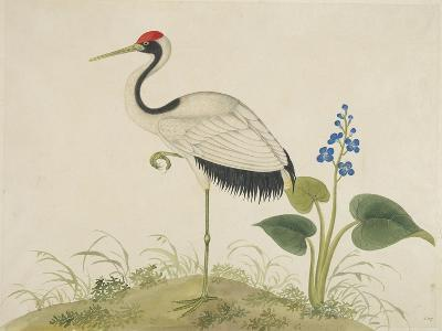 Red-Crowned Crane, c.1800-1840--Giclee Print