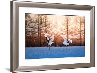 Red Crowned Crane Kushiro Hokkaido Japan-Auttapon Nunti-Framed Photographic Print