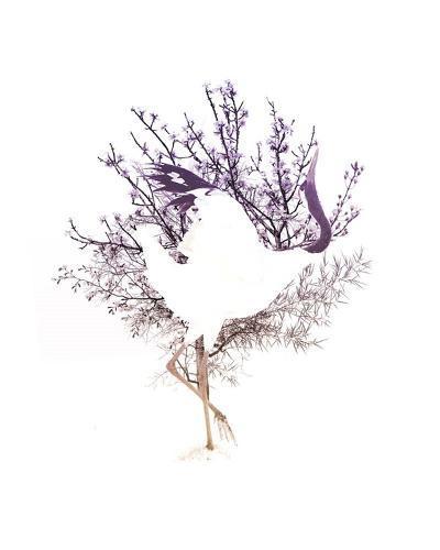 Red Crowned Crane Pair, Part II-Color Me Happy-Art Print