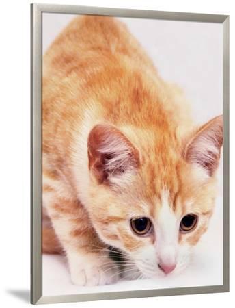 Red Cute Cat Pet Friend-Wonderful Dream-Framed Giclee Print