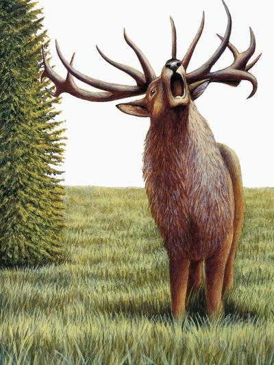 Red Deer Belling (Cervus Elaphus), Cervidae, Drawing--Giclee Print