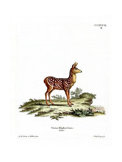 Red Deer Fawn--Giclee Print