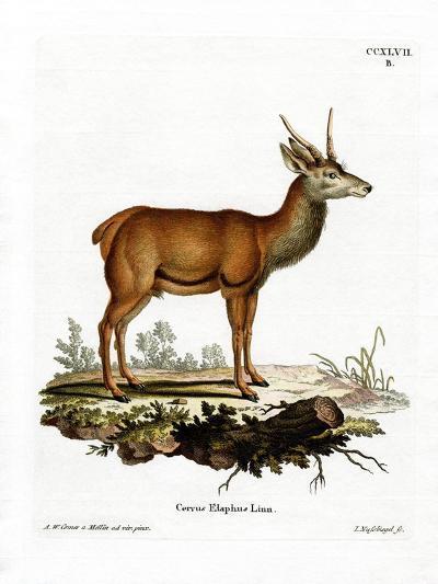 Red Deer--Giclee Print